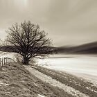 Solitary Tree by Delfino