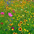 Wild Flower Meadow by James  Key