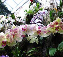 Orchid Spray by MarianBendeth