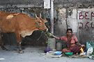 Holy Cow by Kunal Kelkar