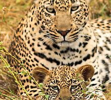 Leopard and cub(I have the cutest baby!) by jozi1