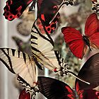 Swallowtail With Friends by SuddenJim