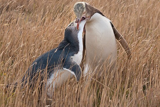 Here's a Mouthful by Werner Padarin