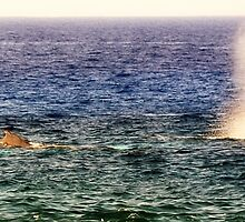 Whale watching Kona Coast by janice fife