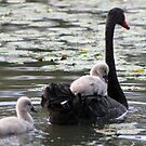Today I saw my first cygnets. by Rookwood Studio ©