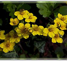 Flowergroup by RosiLorz