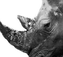 Portrait of a Rhino  by David Crausby