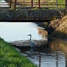 Heron under bridge! by Meladana