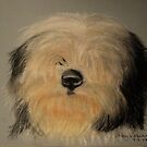 Bearded Collie sketch by Hilary Robinson