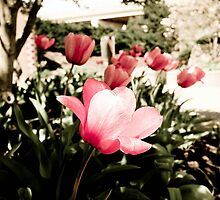 pink by demondonkey79