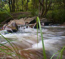 Beside the Creek - Goongerah National Reserve by Brad Leue