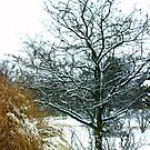 A Snow Tree.... Only in Canada EH!!!  by Larry Llewellyn