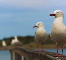 Flock of seagulls by Brad Leue