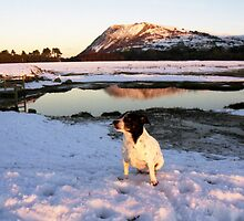 White Christmas with Nell by Michael Haslam