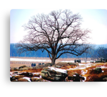 A Tree Stands at Devil's Den Canvas Print