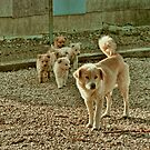 Country Dogs by Susan Russell