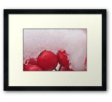 Berries in the Snow, As Is Framed Print