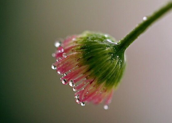 Nectar Fingers by ShotsOfLove