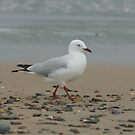 Strolling On The Beach by Carol Field