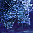 Lionfish by Jesse  B.