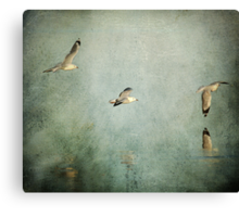 ~ On Silver Wings ~ Canvas Print