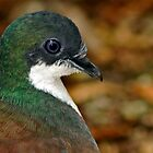 Mindanao Bleeding Heart Dove Portrait by Winston D. Munnings