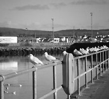 Queuing for fish?? by sarnia2