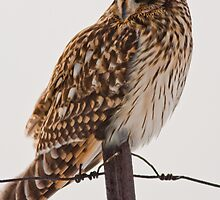 Fierce Lookin Short Eared Owl  by Jean-Paul Fournier