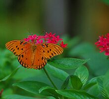 Orange butterfly on red flowers by Ben Waggoner