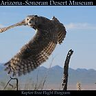 ASDM ~ Raptor Free Flight Program by Kimberly Chadwick