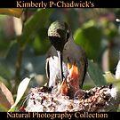 Kimberly P-Chadwick's Natural Photography by Kimberly Chadwick