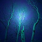 WHISPERING TREES by leonie7