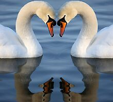 Swan Heart by RedMann