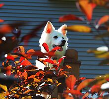 Summertime Sasha Dog by KevinsView