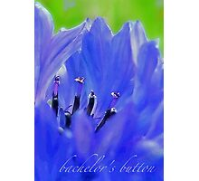 Bachelor's Button Blues Photographic Print