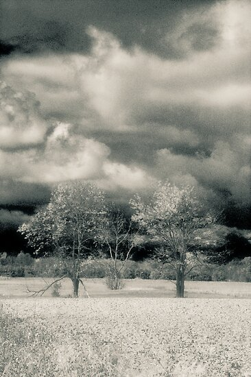 Three Trees Along The Maumee River by Mitch Labuda