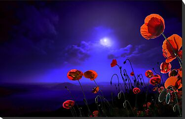 Poppies Blue by Igor Zenin