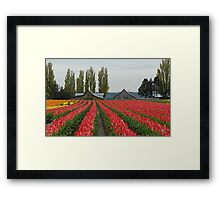 Tulips in Skagit Valley ~Washington state Framed Print