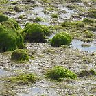 Seaweed Invasion - Weymouth by EmLouise