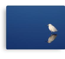 Snowy Egret Blues II Canvas Print