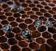 Bees in the Comb by Robbie Labanowski
