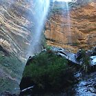 Wentworth falls and the rare conifer by orkology