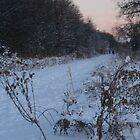 Winter walk by tanmari