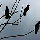 Silhouette Sulphur Crested Cockatoos by Rookwood Studio 
