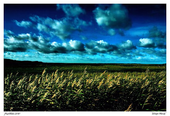 Winter at Salthouse Marsh by Pixelbloke