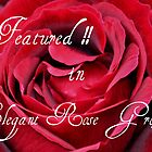 Rose Card Challenge by AnnDixon