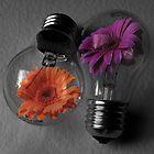 Flowering bulbs by Doug McRae