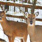 Deer - Mother Daughter Bond by KevinsView
