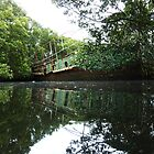 Homebush Bay Shipwrecks - Mangrove Wreck by DashTravels