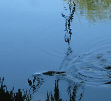 Small fish skimming the water. by Marilyn Baldey